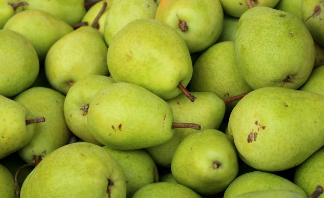 What is the water pear season?