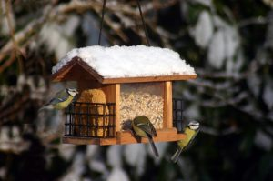 Nourrir nos amis l'hiver