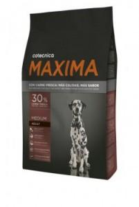 maxima medium adult