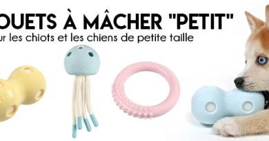 PETIT : jouet aquatique pour chiot ou petit chien