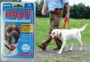 HALTI  headcollar / licol