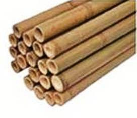 tuteur bambou 210cm