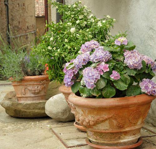 accueil jardinerie jurassienne