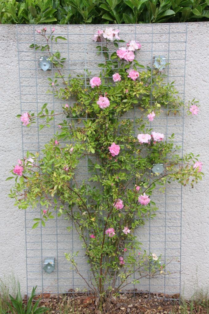 grille de support en acier galvanise pour plante grimpante vegegrille