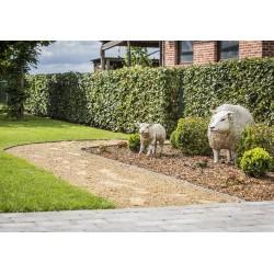 bordure de jardin enroulee ecolat 25 m x 19 cm