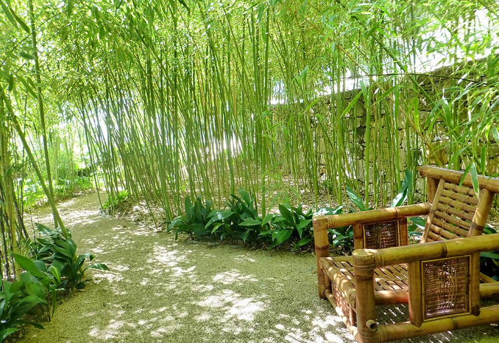 Bananier jardiland great afficher toutes les images with bananier jardiland stunning une - Bambou en pot jardiland ...