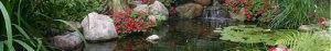 Bassin avec rochers et géraniums.
