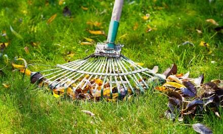 3 astuces pour un jardin rayonnant en été