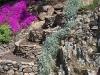 Corbeilles de la rocaille 17