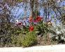 Anemone coronaria 'Anemone de Caen'
