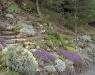 Grande rocaille 08