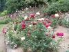 roseraie_partie-basse02