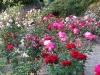 roseraie_partie-basse04