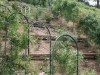 roseraie_partie-en-terrasses01