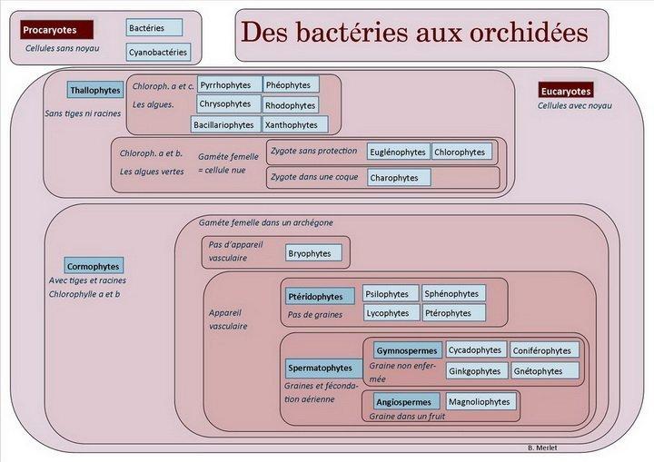 Des bactéries aux orchidées