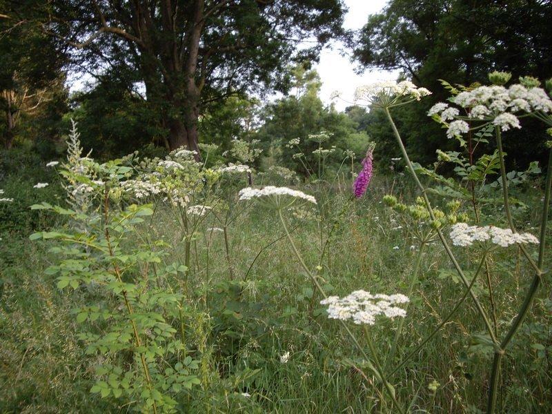 Parmi les grandes herbes