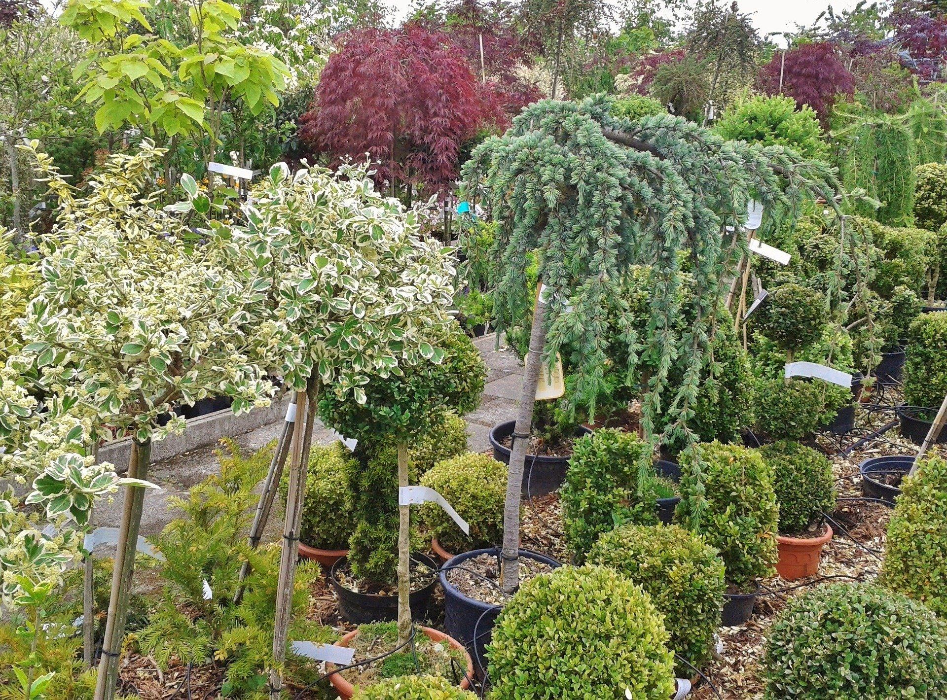 Plantes Pour Talus Sec stages jardinage - les jardins du gué