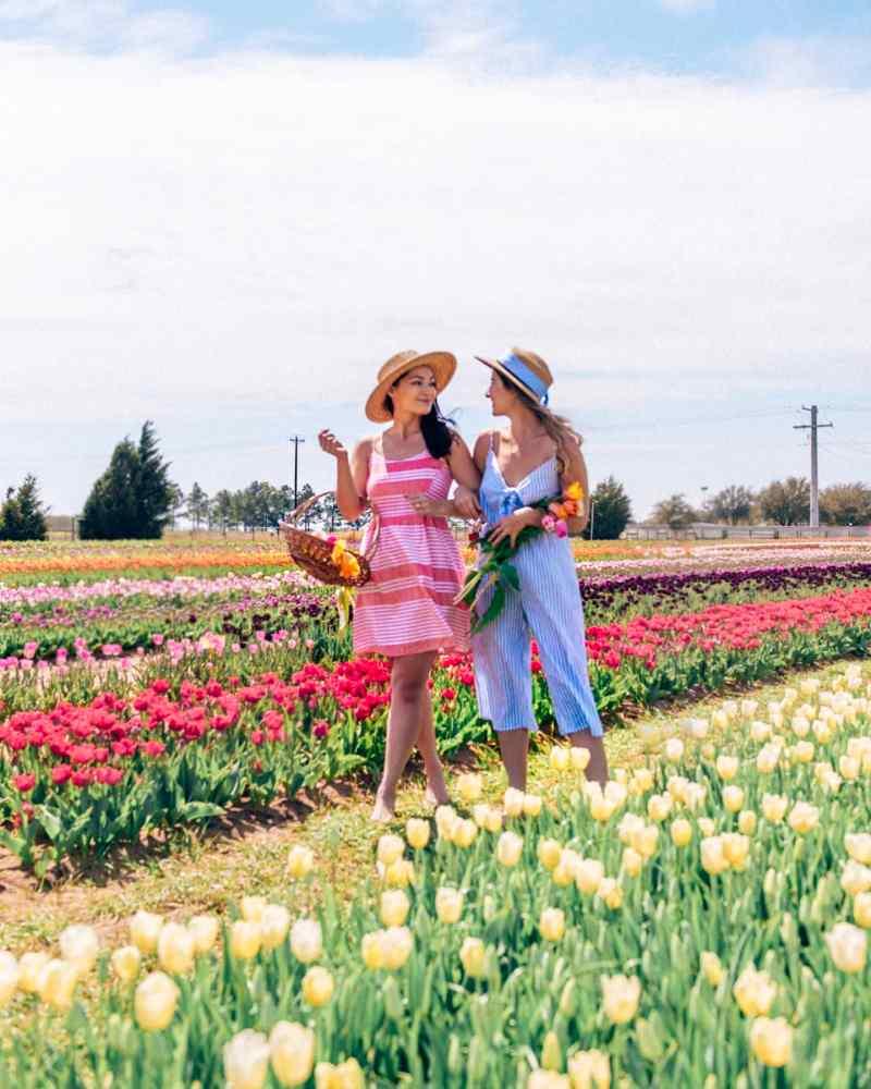 girls walking along tulips