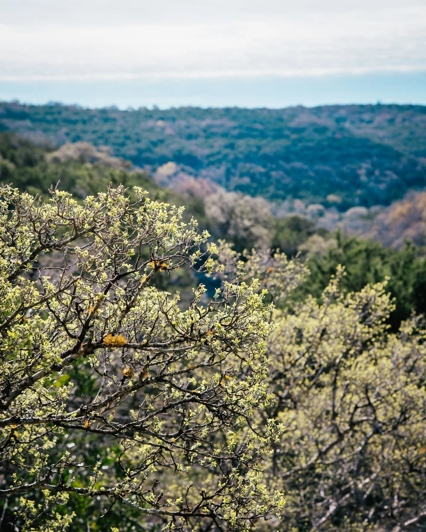 hill country blooms