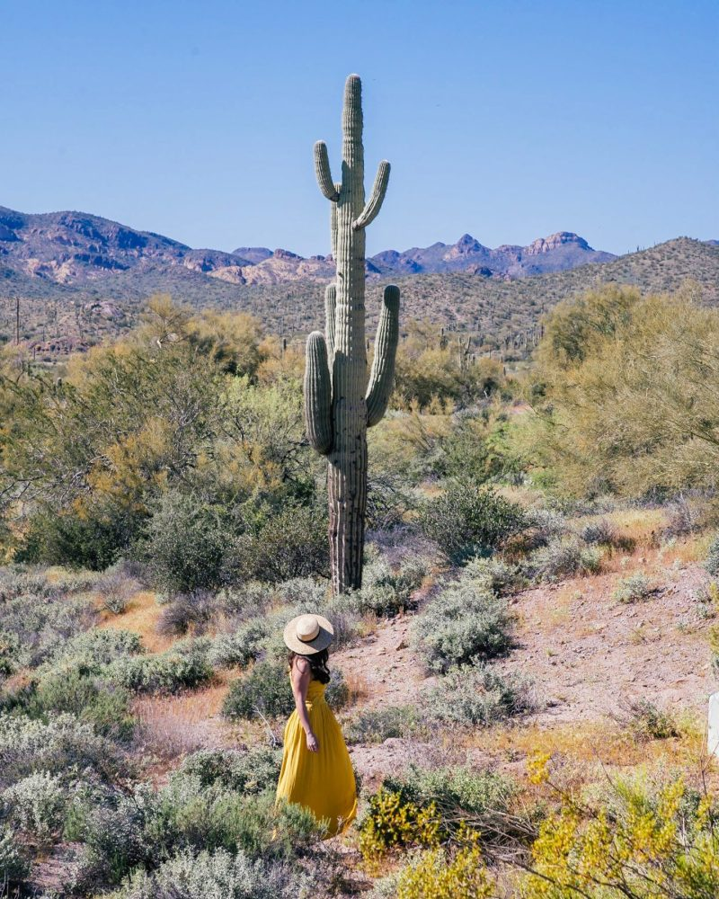 Girl next to cactus at Lost Dutchman State Park