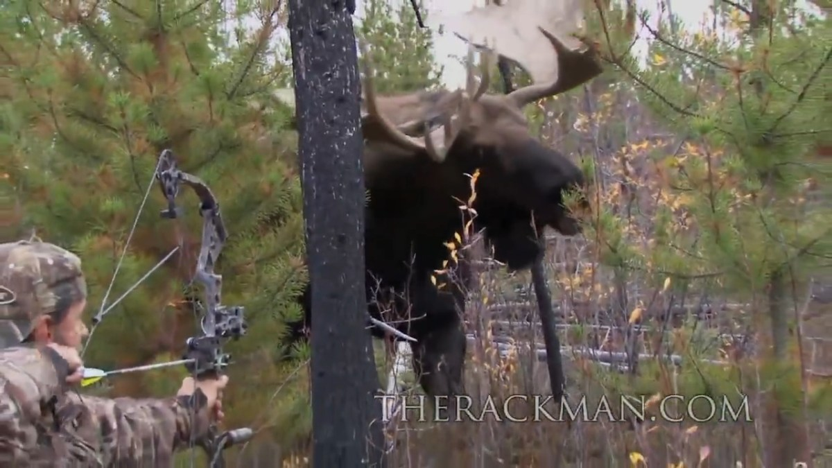 Hunter Comes Eye to Eye with Big Bull Moose [VIDEO]