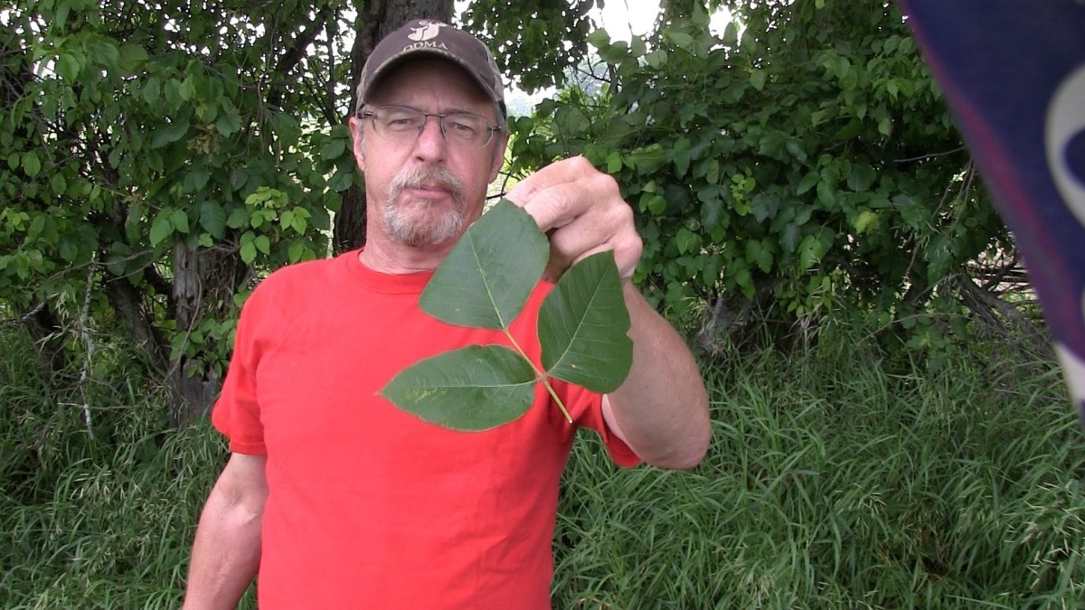 Never Get Poison Ivy Again [ Video]