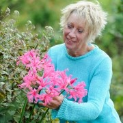 BBC Gardeners' World - Carol Klein with Nerine 'Zeal Giant' and Ageratina 'Chocolate'