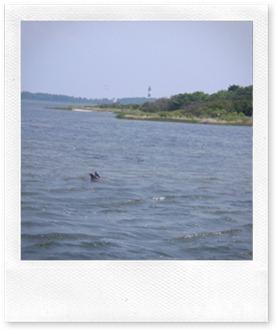 Nags Head Dolphin Watch