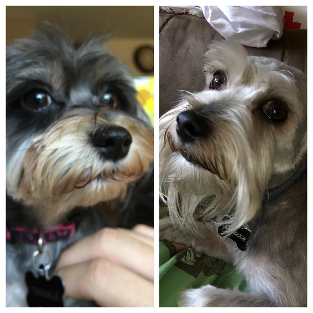The dogs got their hair cut today