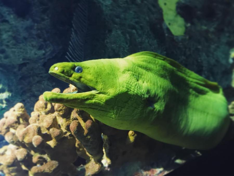 Ripley's Aquarium Eel