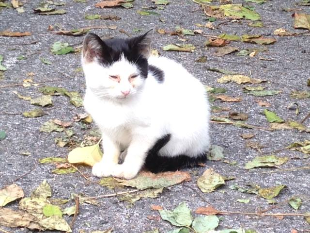 2014 Oct 26 jasper cat