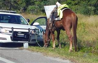 Image: Polk County Sheriff's deputies arrested a Polk City woman for DUI on a horse in Lakeland, Florida.