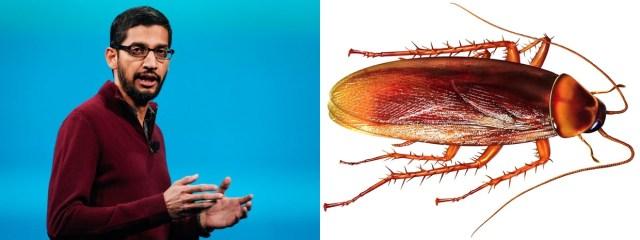 Kisah Inspiratif : Pidato Sundar Pichai, CEO Google tentang Kecoa