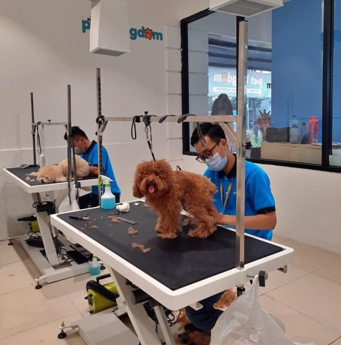 Pet Kingdom Hadir di Surabaya dengan Pet Facility Terluas