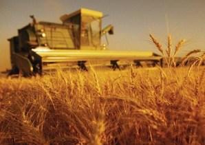 poljoprivredna-proizvodnja-midi