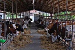 farmland-nova-topola-midi