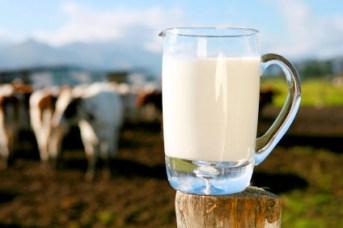 kravlje-mlijeko-midi