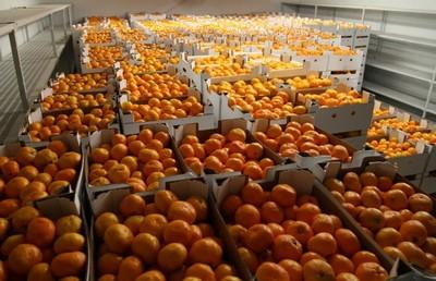 mandarine-midi