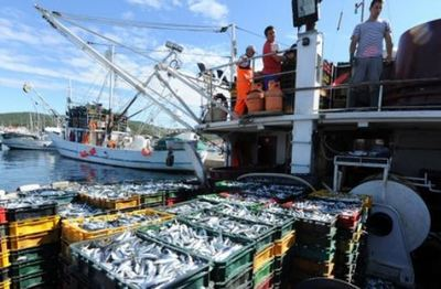 Hrvatska udvostručuje proizvodnju ribe