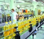 uljara-cepin-proizvodnja-midi