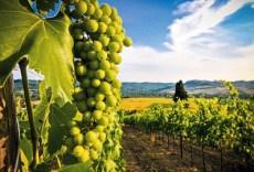 vrsacki-vinogradi