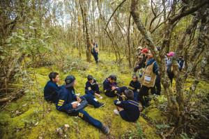 El proyecto de la Pontificia Universidad Javeriana busca acelerar el proceso de sucesión natural del bosque, pues de no hacerlo demoraría décadas en volver a su estado original.