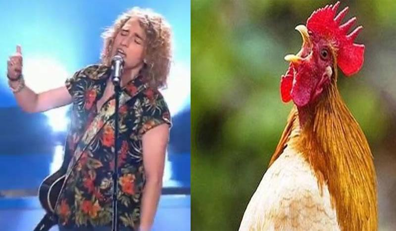 meme gallo manel navarro eurovision