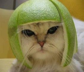 El gato de BZFlag