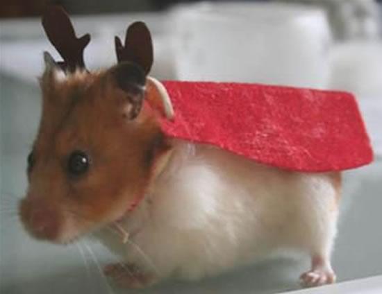 Hamster-Reno