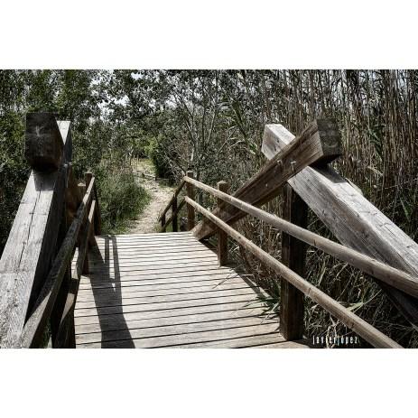2020 Parque Natural de La Albufera de Mallorca - Alcudia - Baleares (Spain)