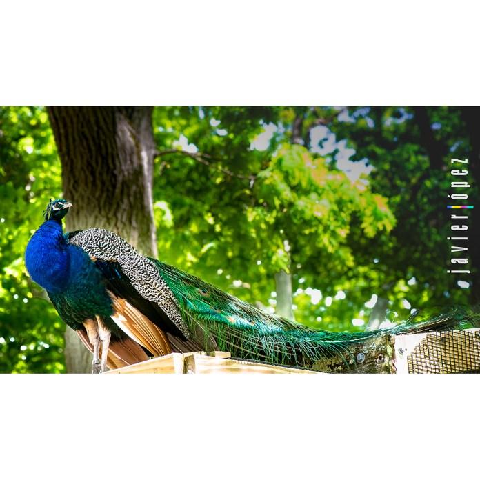2019 Franklin Park Zoo Boston . Massachusetts