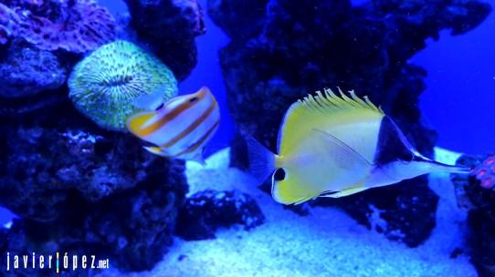 2020 Palma Aquarium (Mallorca) Spain