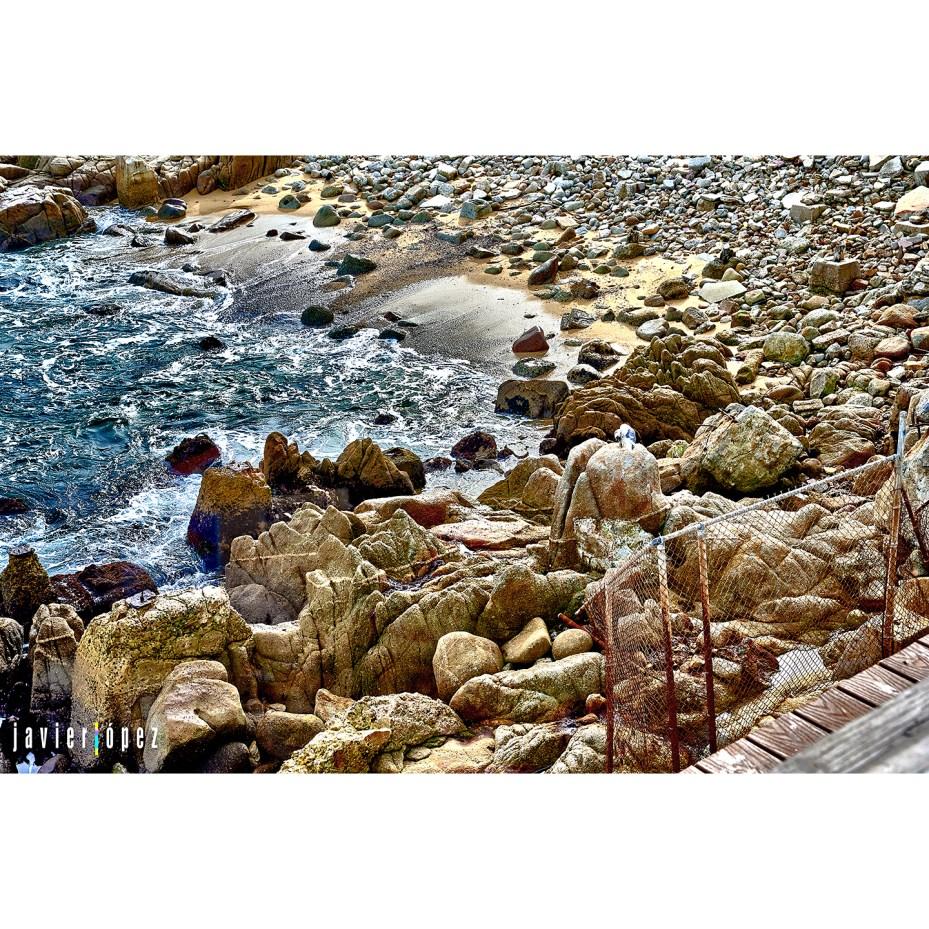 2019 SF Monterey Bay Aquarium