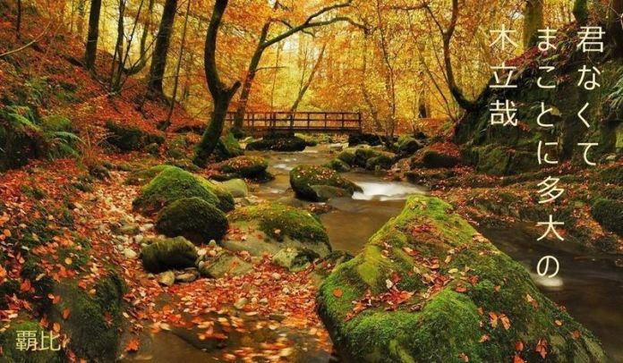 haiku de otoño y bosque. Soledad